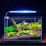 Coco LED Aquarium Light - Luminaire latéral en Cristal avec Pince - avec Tube de raccordement en Acier Inoxydable et Clip, Prise de transformateur indépendante de la marque Éclairages pour aquarium image 1 produit